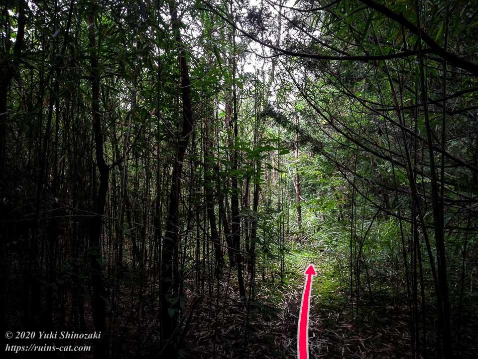 小川脳病院(聖仁会小川病院)への行き方を示した写真 地点6「次第に北へと進路を変える山道」