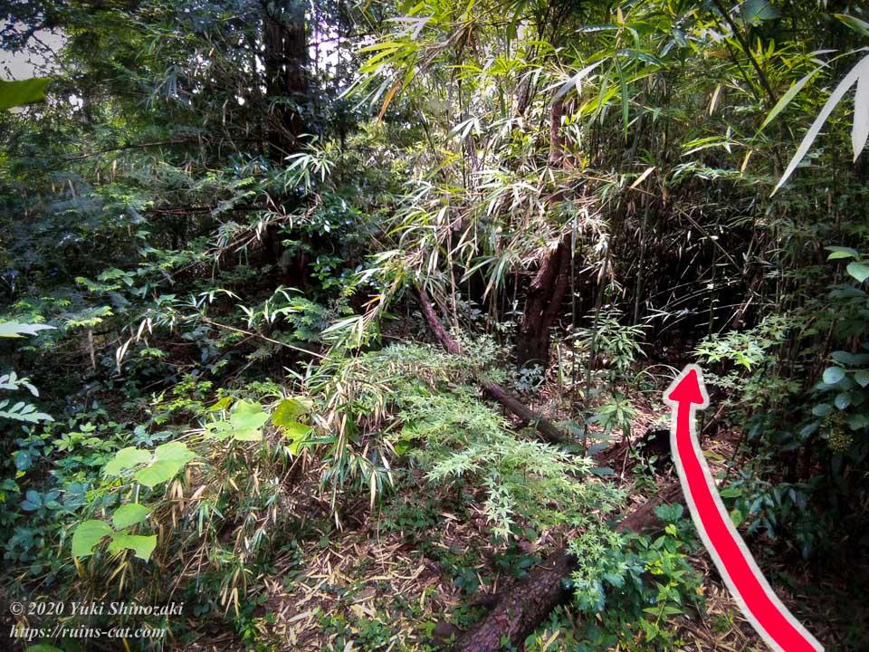小川脳病院(聖仁会小川病院)への行き方を示した写真 地点8「広場の終わり、行く手を阻む竹林」