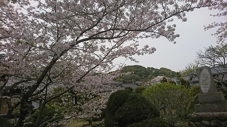 桜 2021.3.30