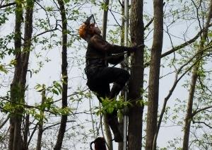 03 枝落としの木登り (300x212)