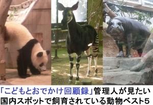 見たい動物ベスト3-0-1