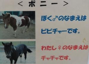 大池動物11