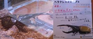 磐田昆虫6