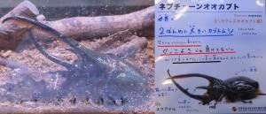 磐田昆虫8