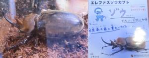 磐田昆虫9