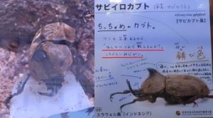 磐田昆虫10