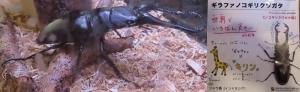 磐田昆虫11