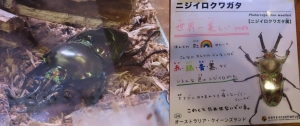磐田昆虫12