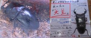 磐田昆虫13