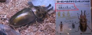 磐田昆虫14