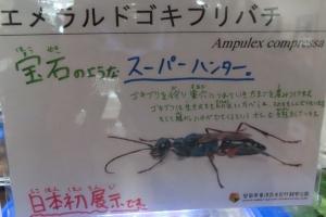 磐田昆虫15