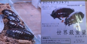 磐田昆虫16-1