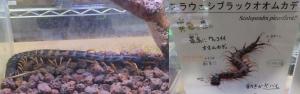 磐田昆虫17-1
