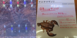 磐田昆虫18