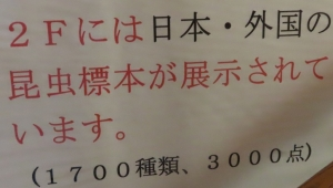 磐田昆虫23