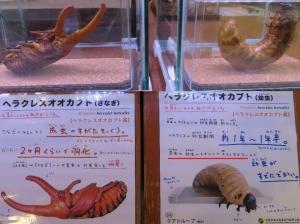 磐田昆虫6-1