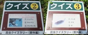 竜洋昆虫2回9