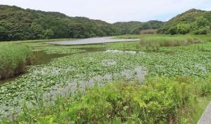 鶴ヶ池10