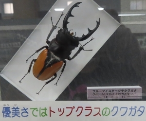名和昆虫10