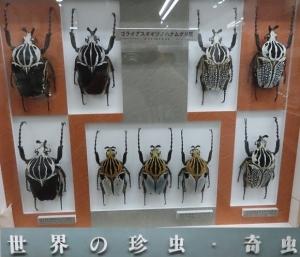 名和昆虫11