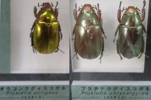 名和昆虫14