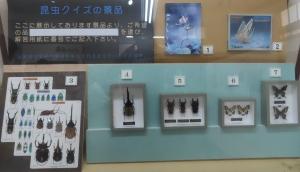 名和昆虫25
