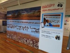 宍道湖グリーン3