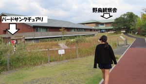 宍道湖グリーン8
