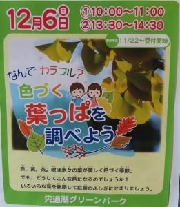 宍道湖グリーン29