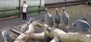 富士花鳥展示19