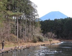 富士花鳥展示31