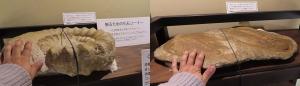奇石展示12-1