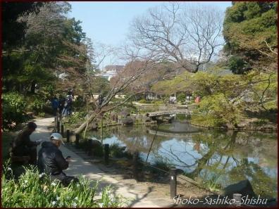 20200327 細川庭園 1  桜咲く