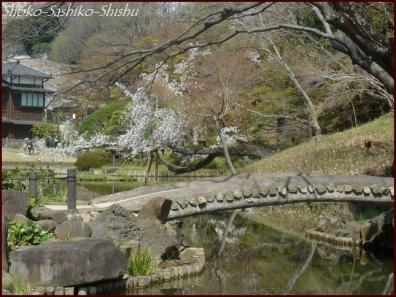 20200327 細川庭園 2  桜咲く
