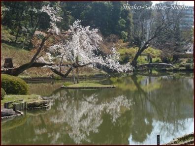 20200327 細川庭園 3  桜咲く