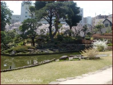 20200327 細川庭園 4  桜咲く