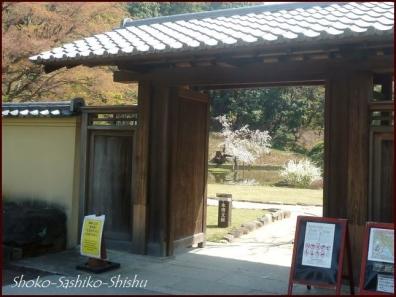 20200327 細川庭園 5  桜咲く