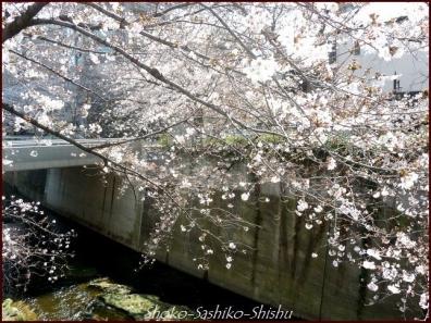 20200327 神田川 4  桜咲く