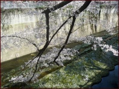 20200327 神田川 7  桜咲く