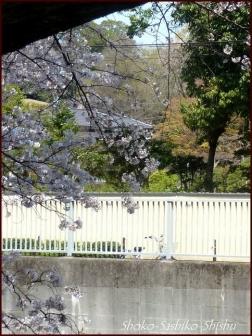 20200327 神田川 11  桜咲く