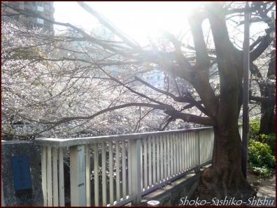 20200327 面影橋 2  桜咲く