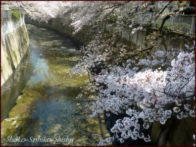 20200409 桜 3  桜散る