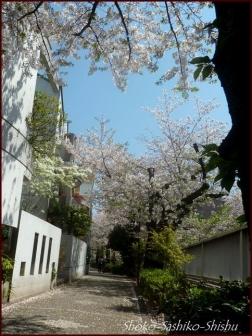 20200409 桜 4  桜散る