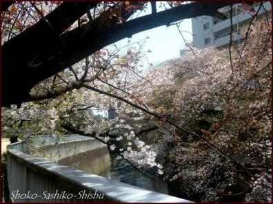 20200409 桜 5  桜散る