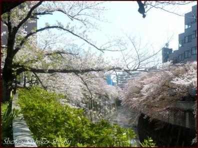 20200409 桜 6  桜散る