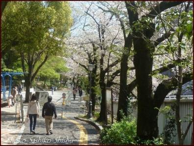 20200409 桜 8  桜散る