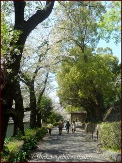 20200409 桜 9  桜散る