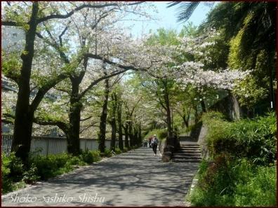 20200409 桜 12  桜散る