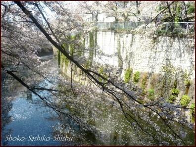 20200409 桜 13  桜散る