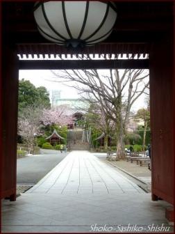 20200416 観音堂・本堂まで 3 護国寺